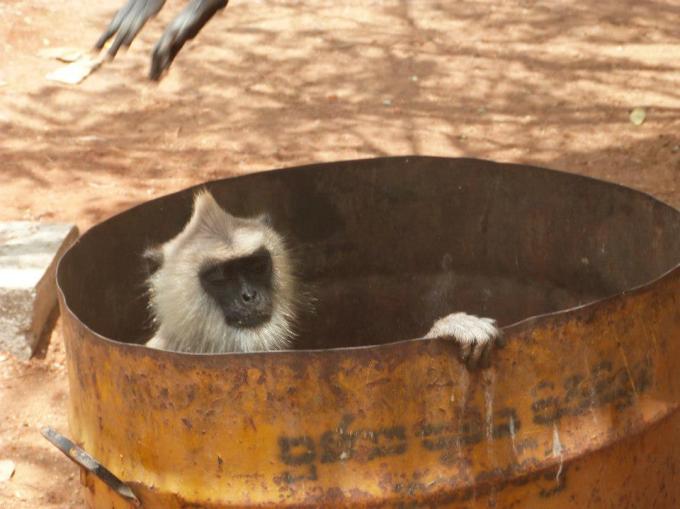 angry-bin-monkey