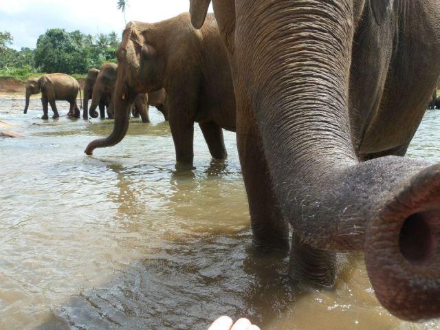 elephant-cuteee
