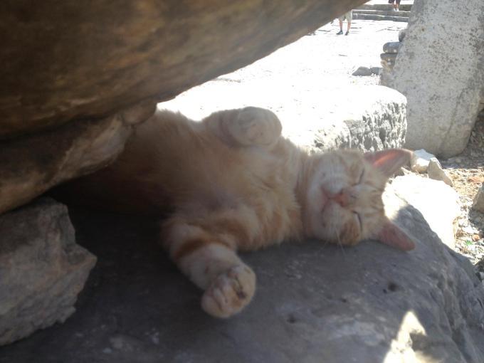 kitty-cute