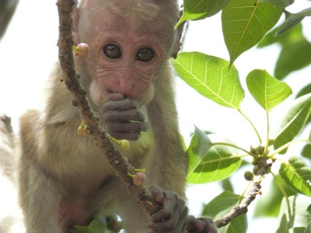 monkeyy